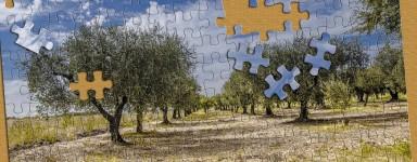 Puzzels van de natuur